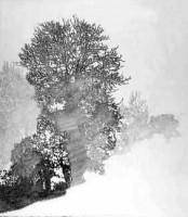 http://www.mauricematieu.com/files/gimgs/th-124_arbre2.jpg